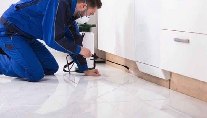 How To Finalize A Pest Inspection Agency For Your Home?